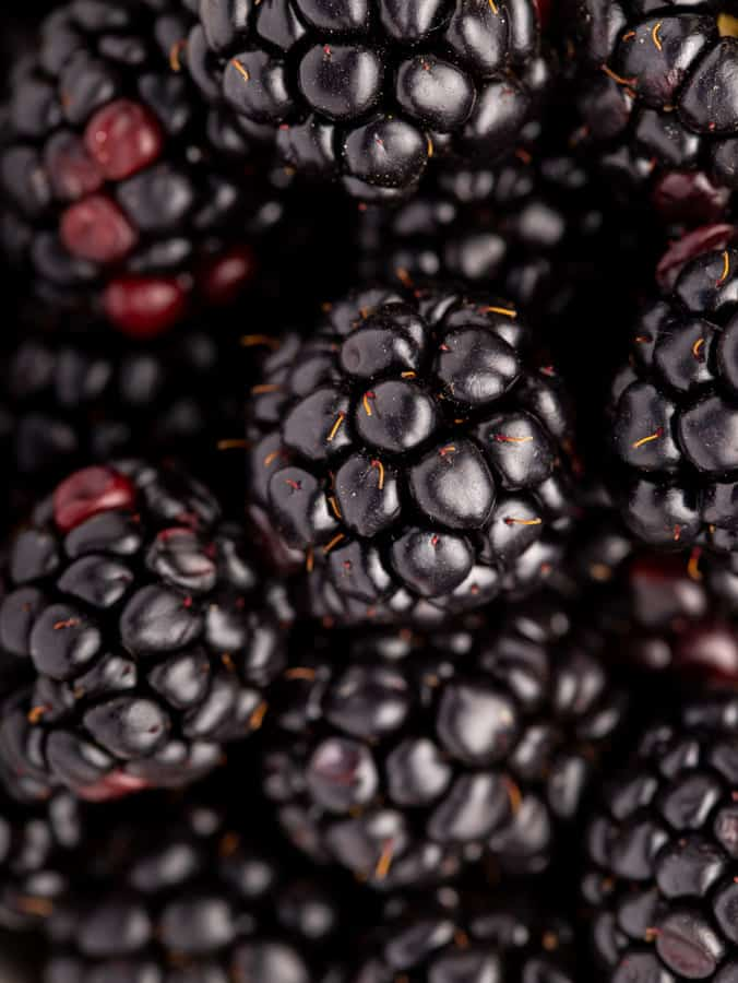 blackberries close up
